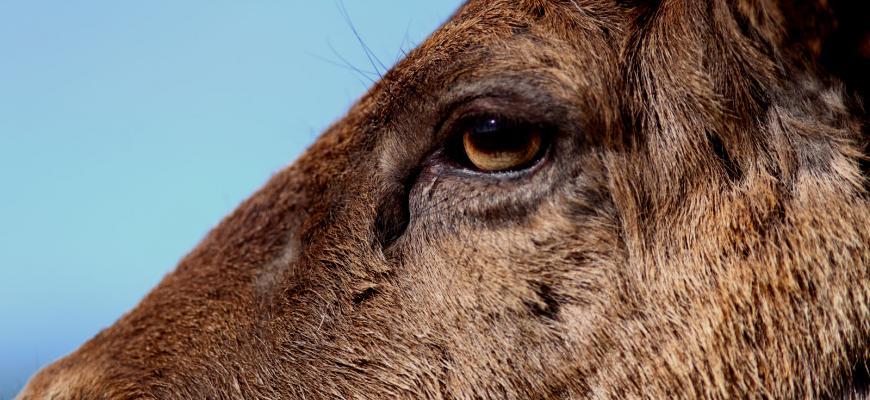 Safari Daniel - atrakcja w gospodarstwie Danielówka