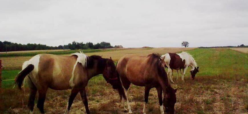 Stadnina koni w Ciemiętnikach - nieopodal gospodarstwa Danielówka
